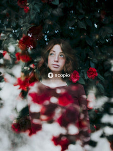 Double exposure of red rose and portrait of woman