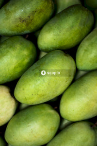 Pile of green mangoes
