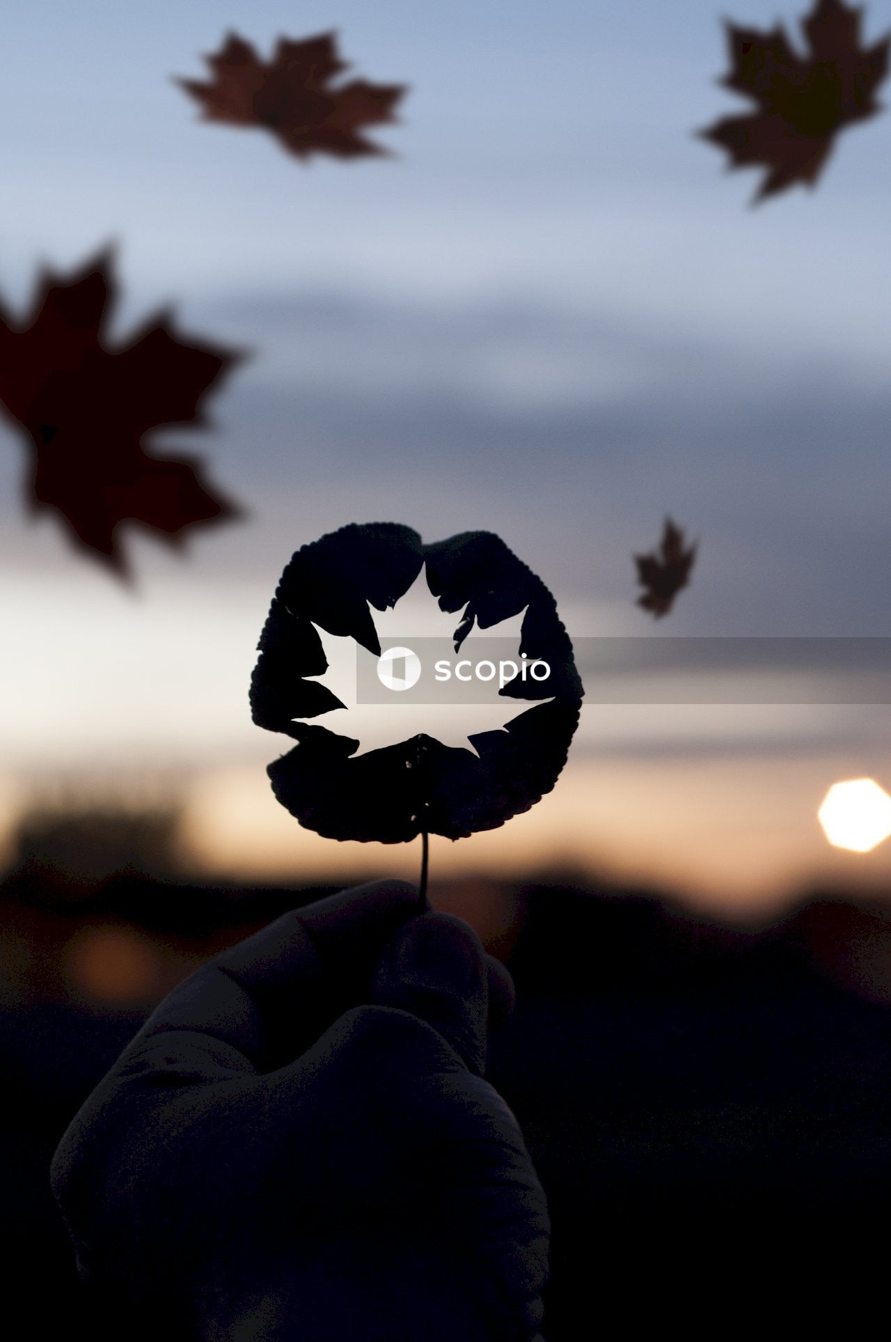 Person holding red maple leaf during sunset