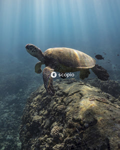 Underwater view of turtle
