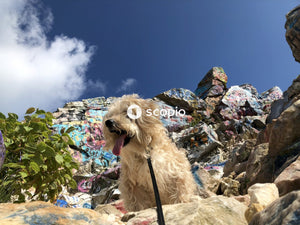 Pink and white long coat small dog on brown rock under blue sky