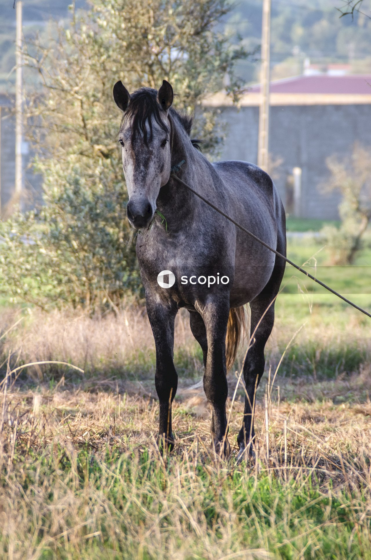 Black horse on brown grass field