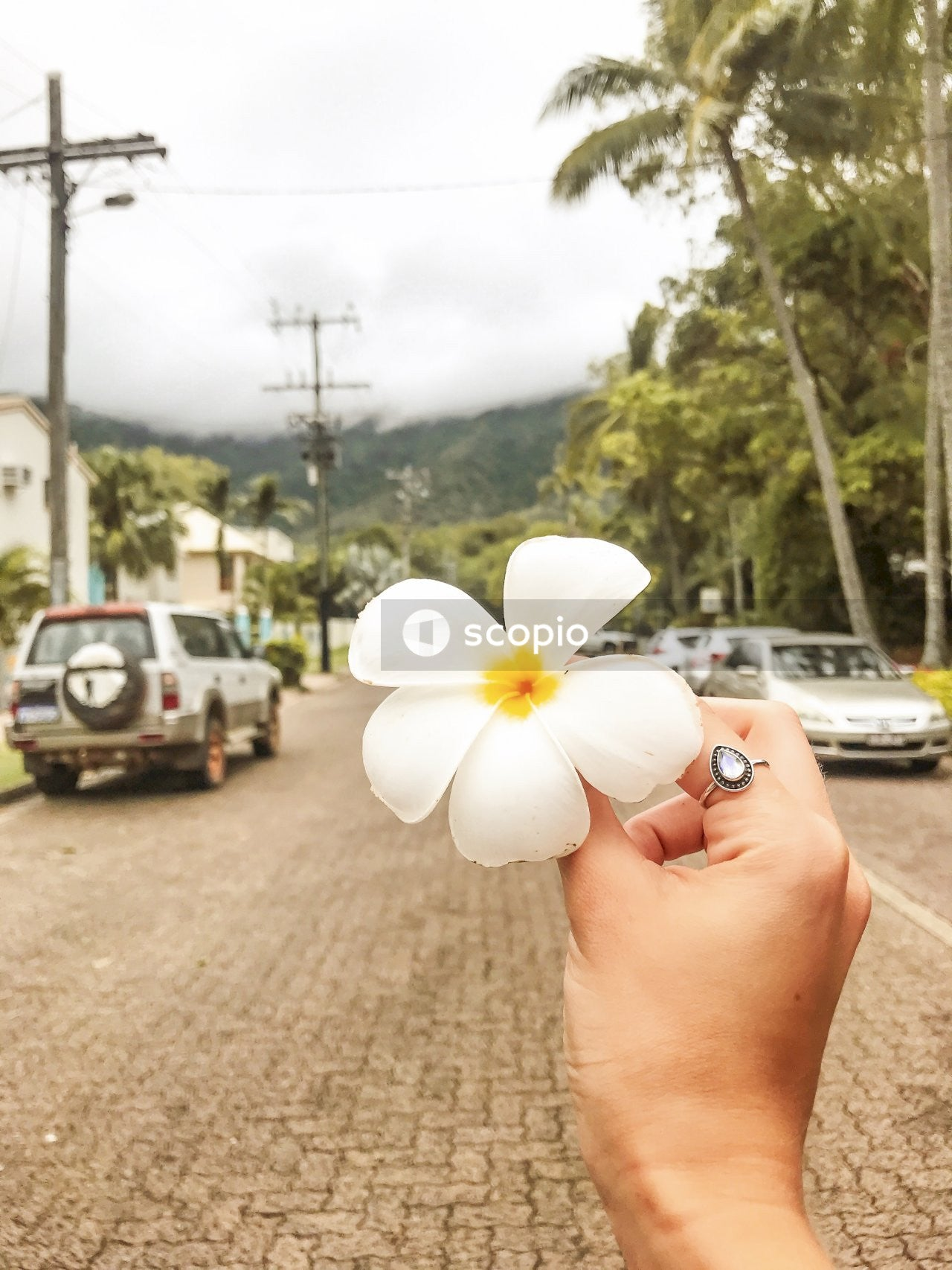 Person holding white flower