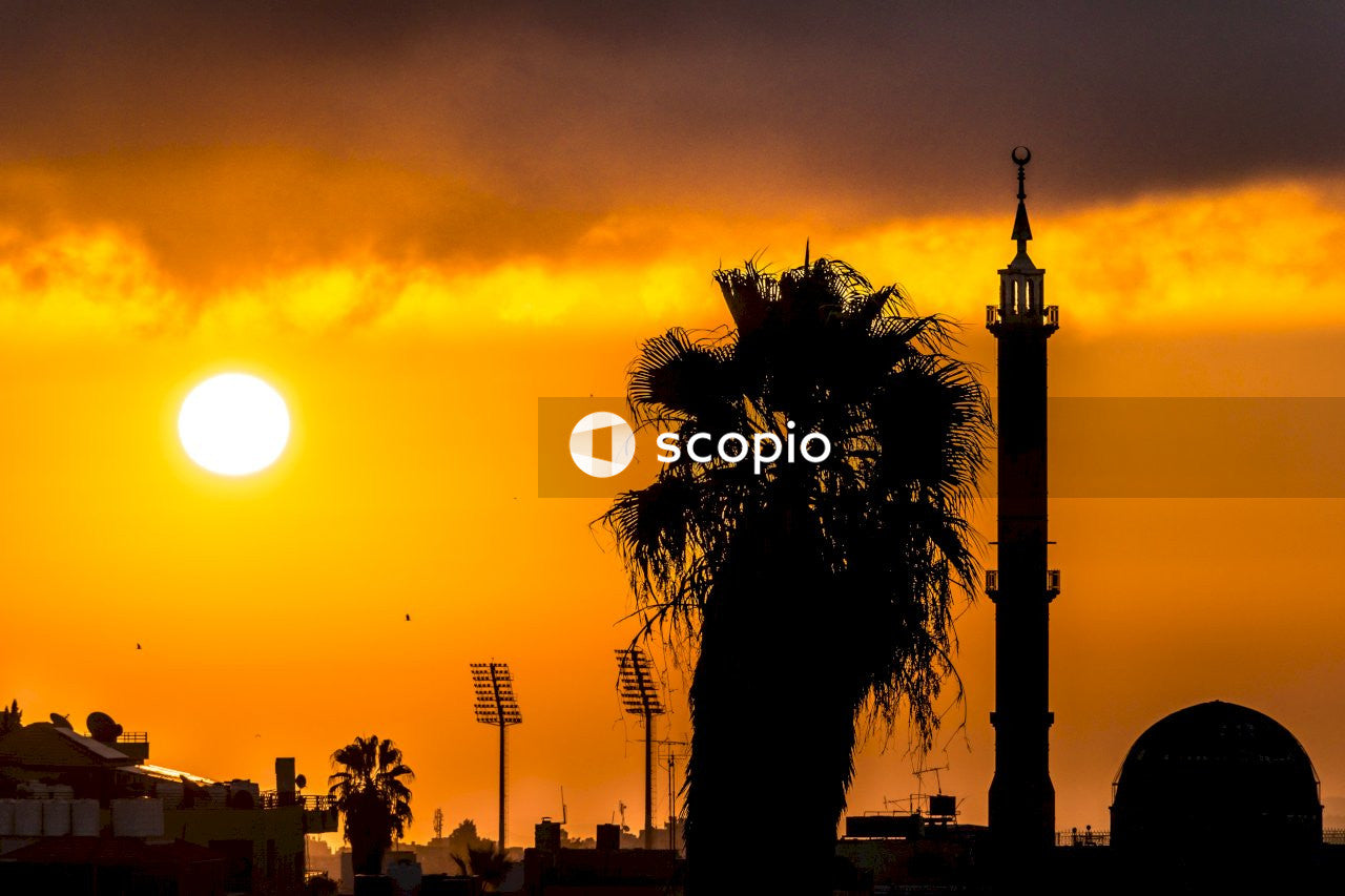 Silhouette photo of palm trees and and building at golden hour