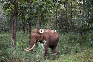Brown elephant on green grass field
