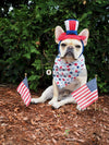 Tan short-coat dog with american flags