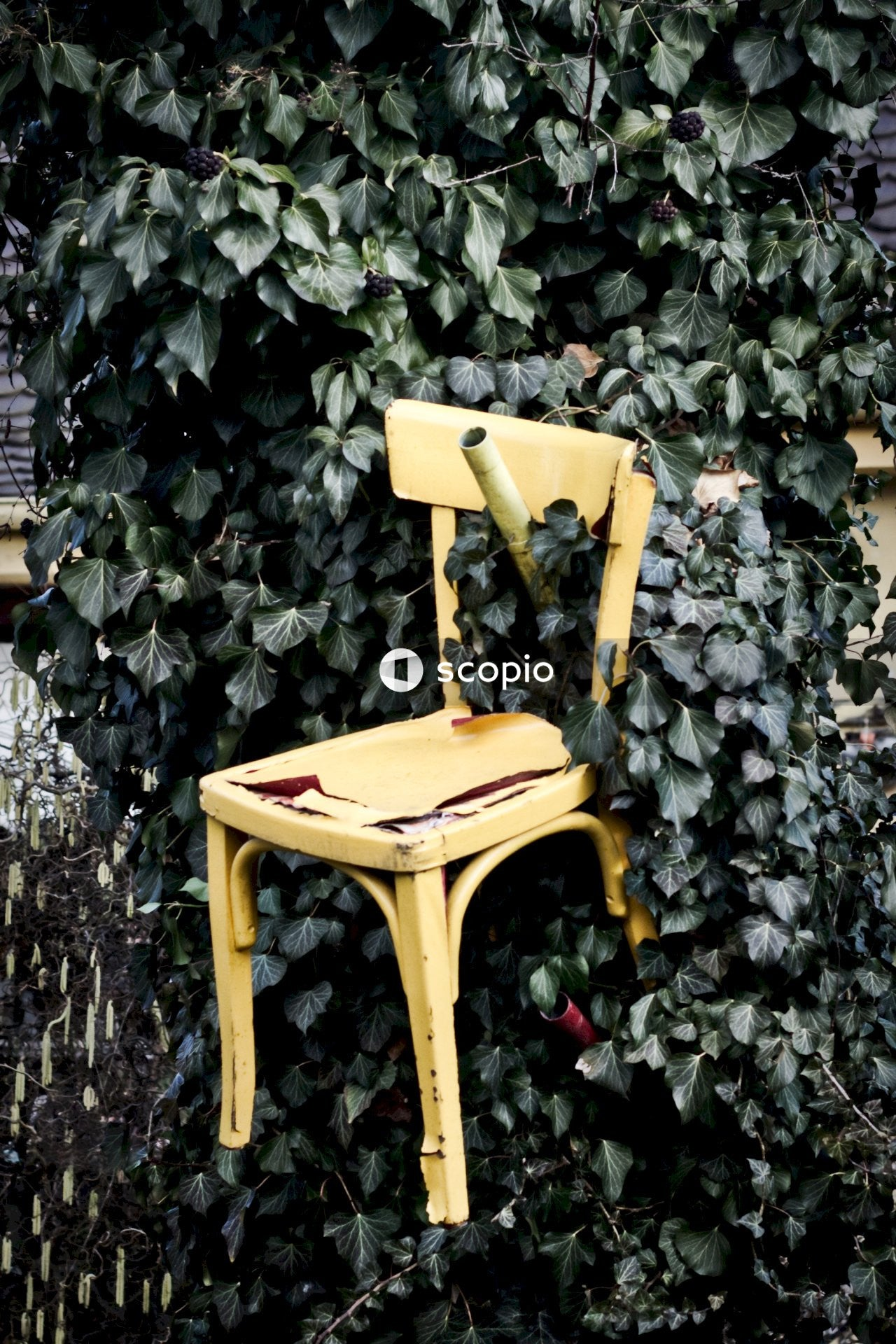 Yellow plastic chair beside green plant
