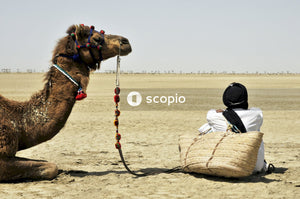Camel and man sitting on ground