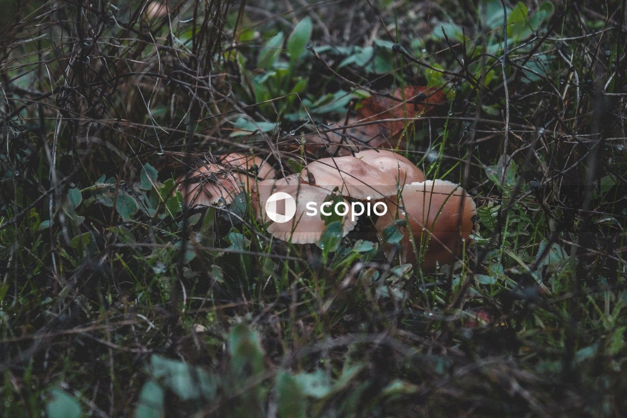 Brown mushroom on green grass