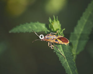 Brown and orange bug perching on green-leafed plant