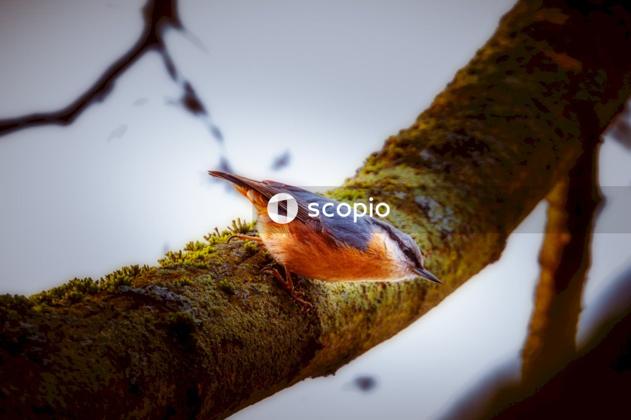 Brown and blue bird on tree branch