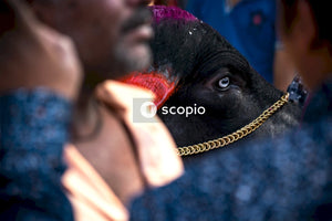 Person holding black horses nose