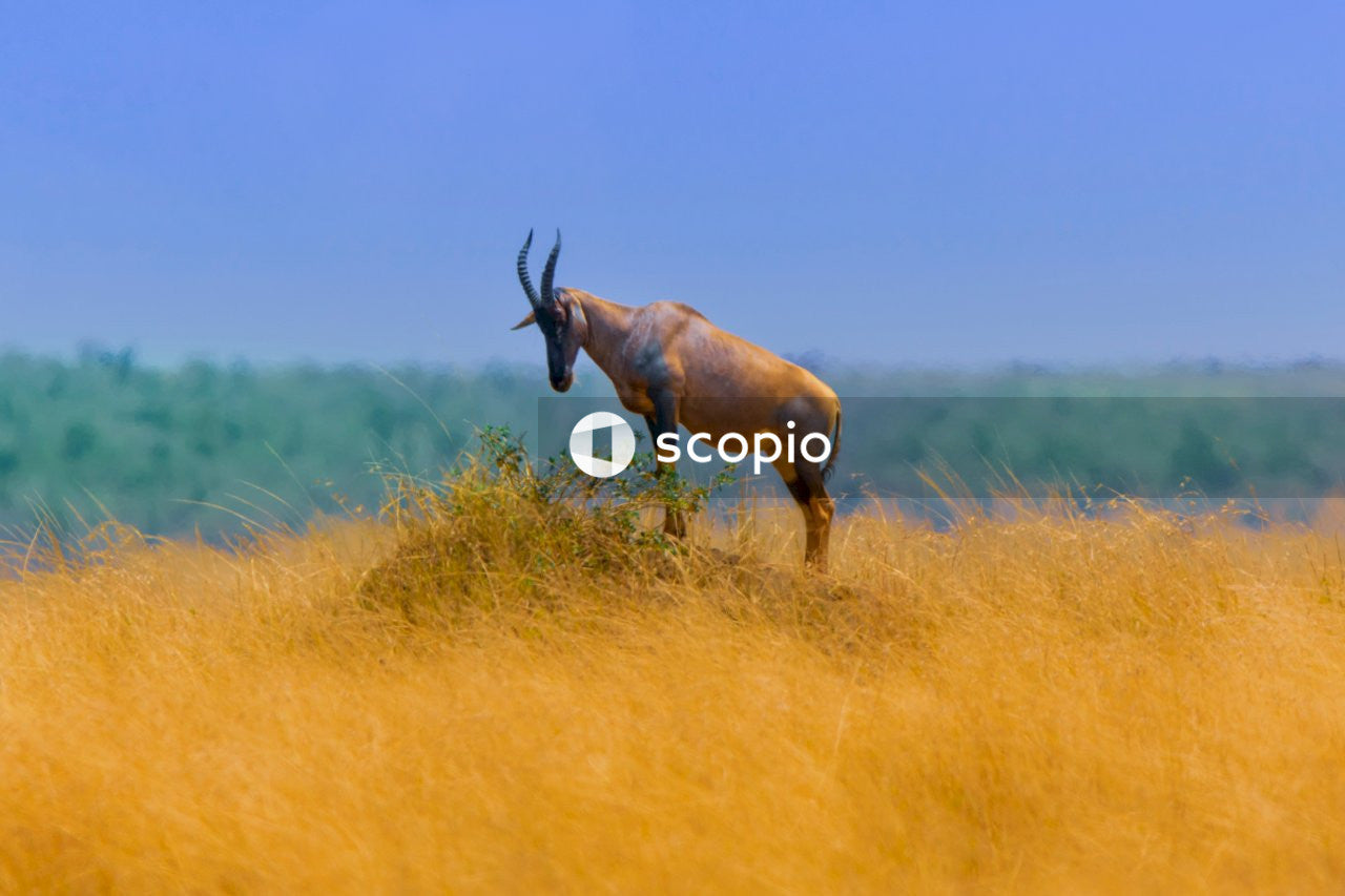 Antelope standing on rock among grass