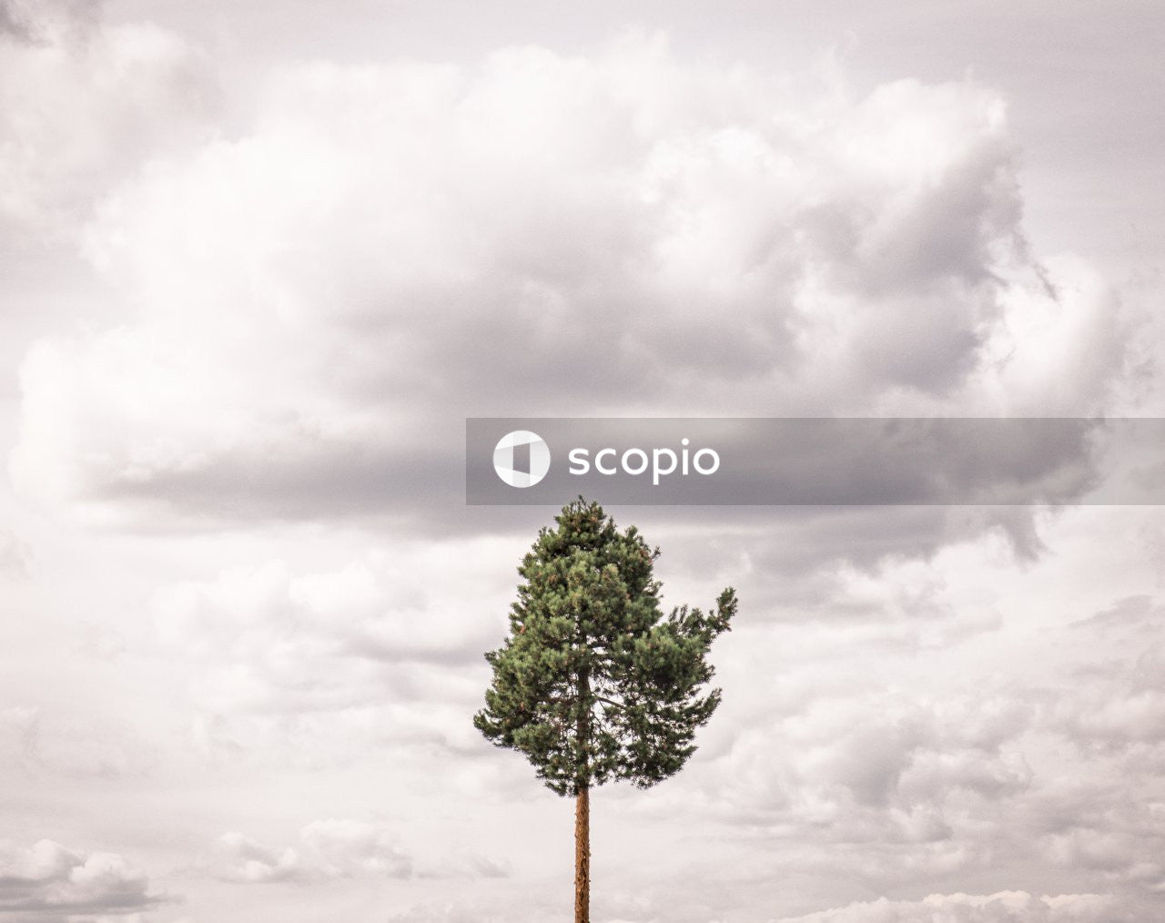Green tree under white clouds