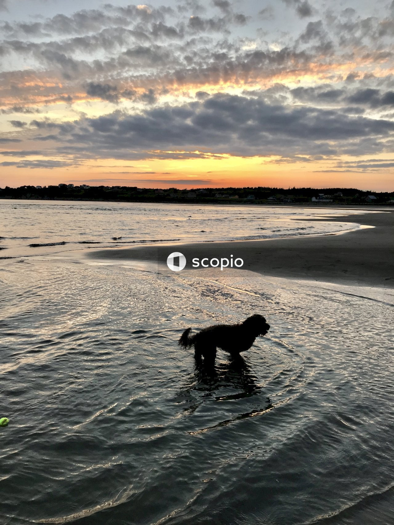 Black dog standing on sea at daytime