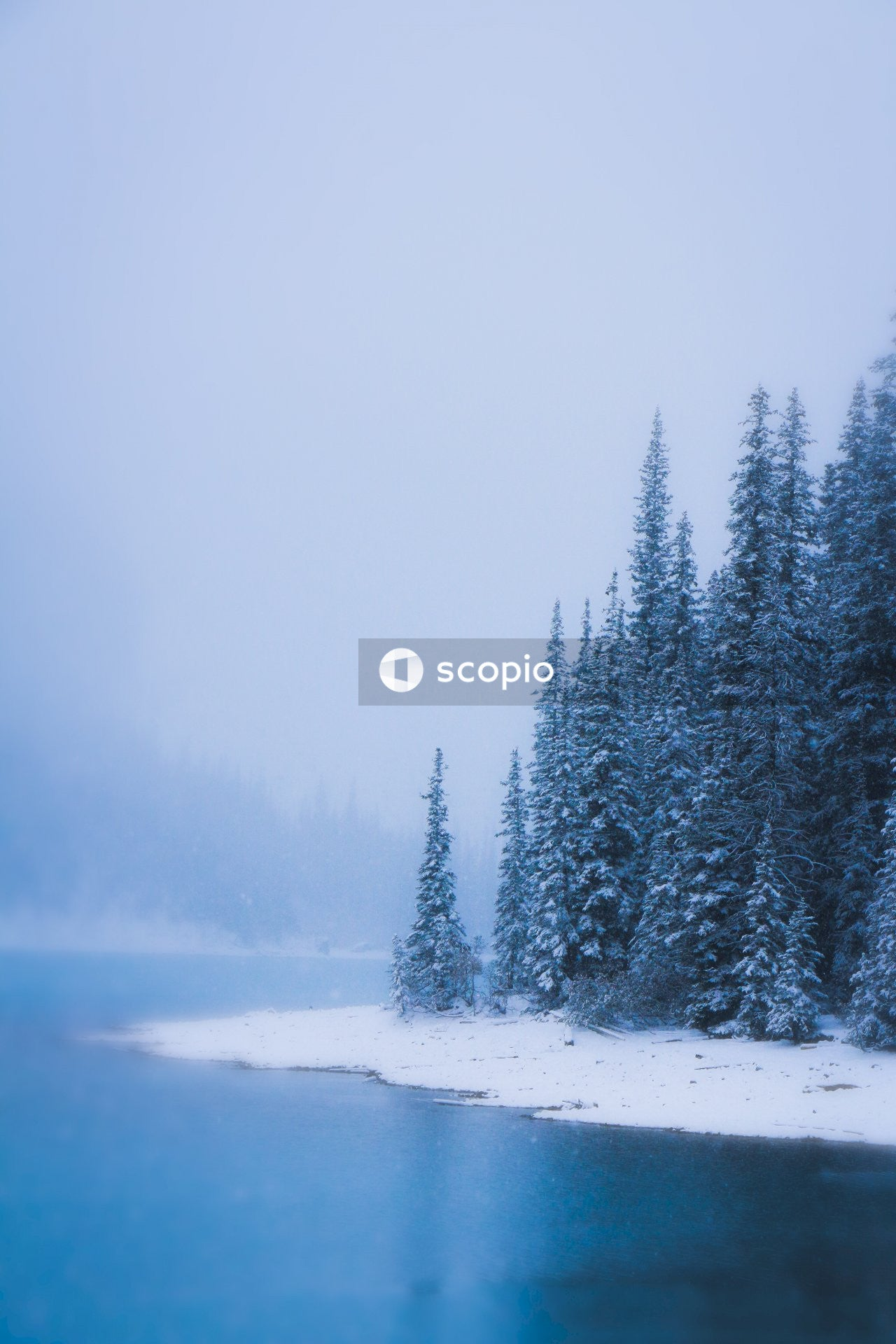 Green pine trees covered with snow near body of water