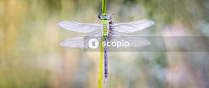 Green dragonfly on selective focus