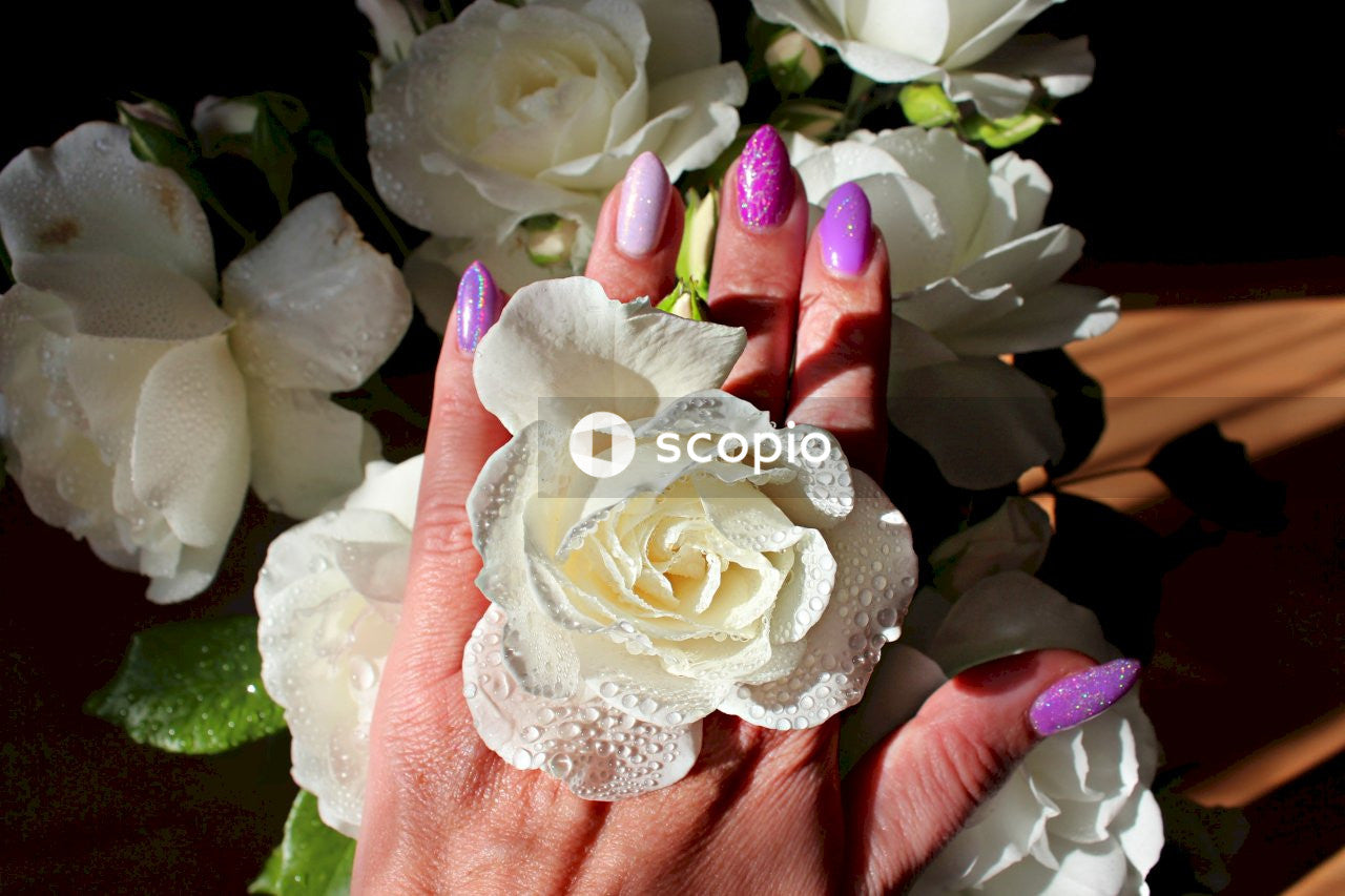 White rose on persons hand