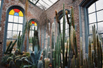 Cactus Cathedral