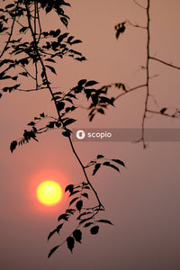 Sun behind the tree branch