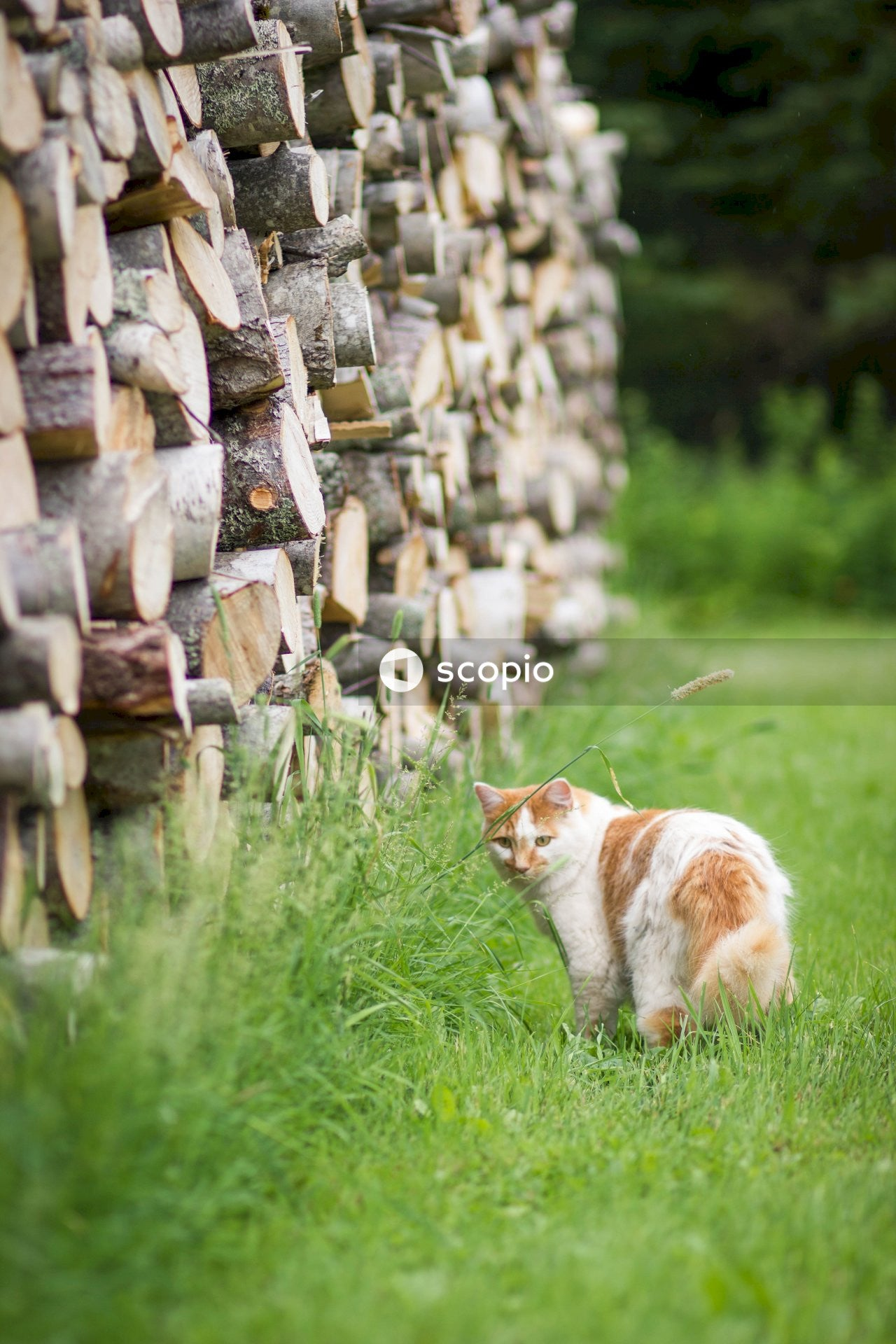 Shallow focus photo of white and orange cat