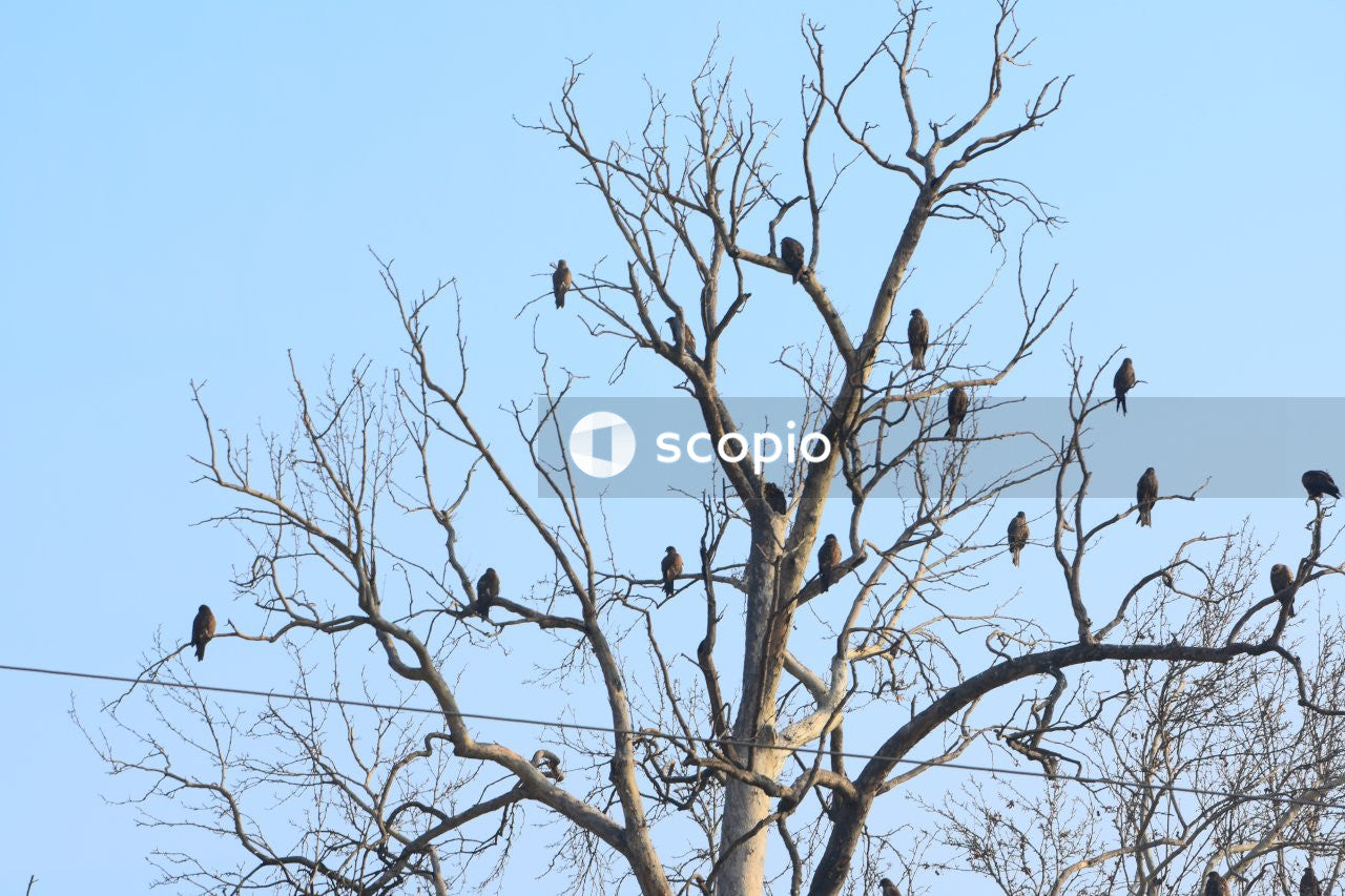 Black birds on tree branches