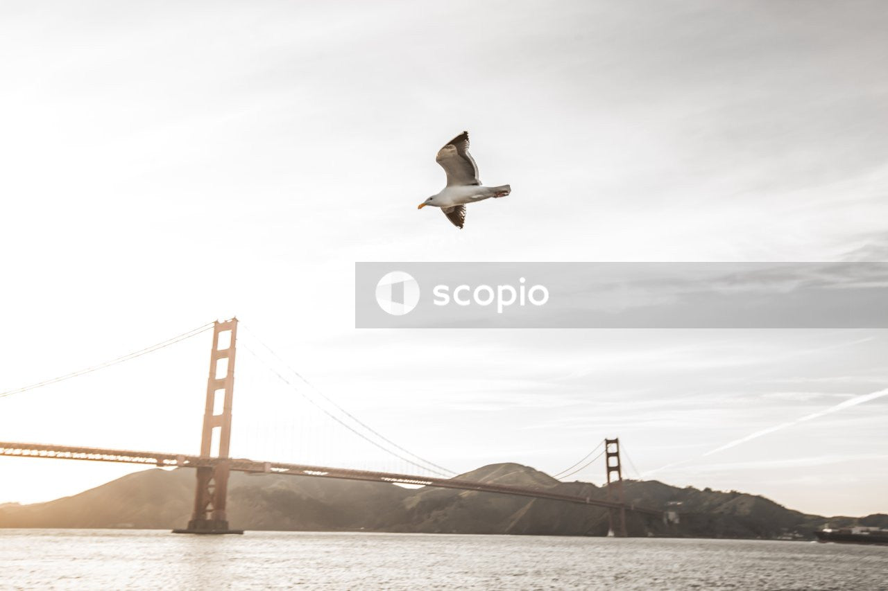 Bird flying over the golden gate bridge
