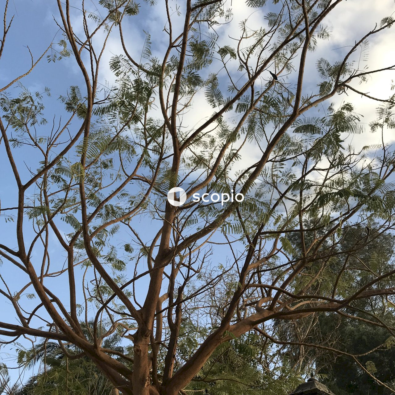 Low angle photography of brown tree under blue sky