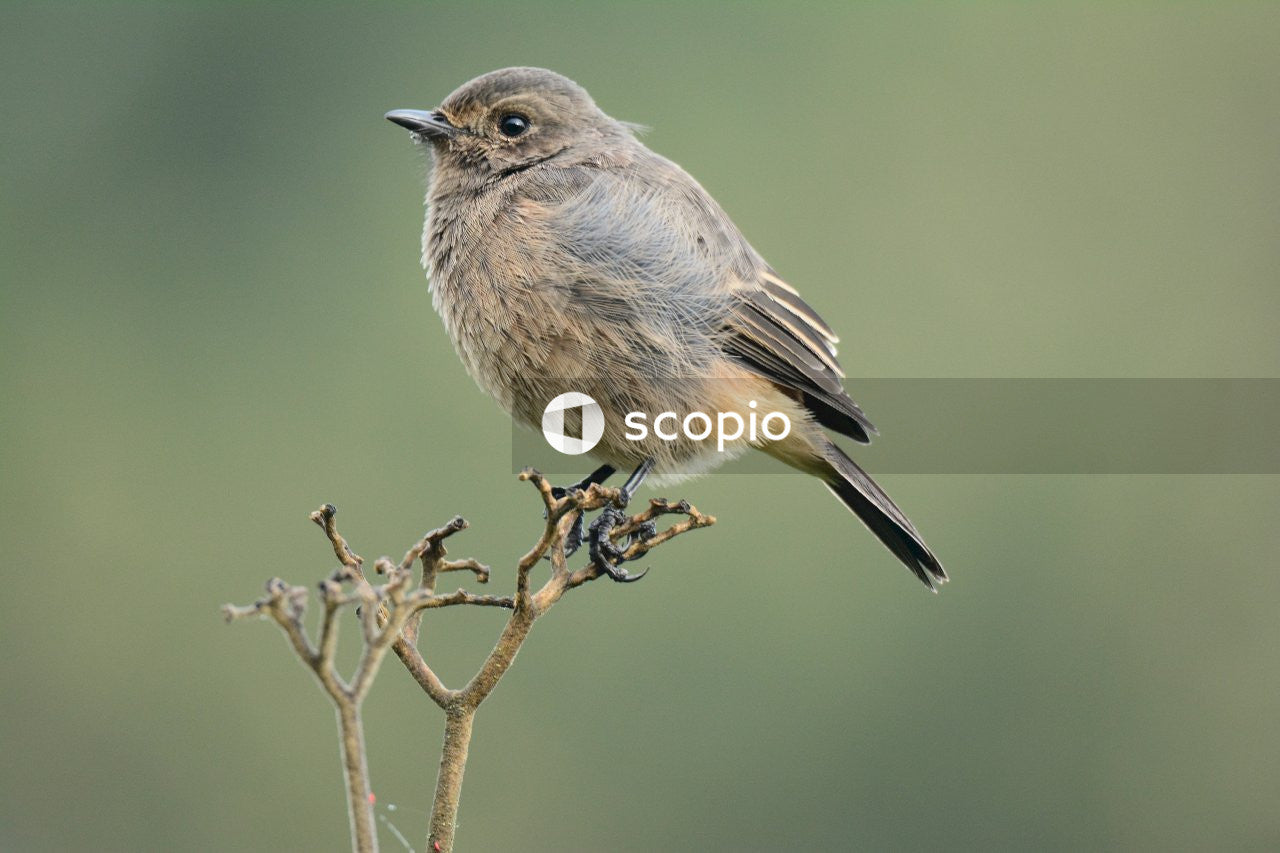 Gray and brown bird on brown tree branch