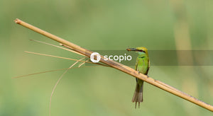 Green and brown bird on brown tree branch