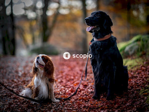Black and brown short coated dog sitting on brown dried leaves