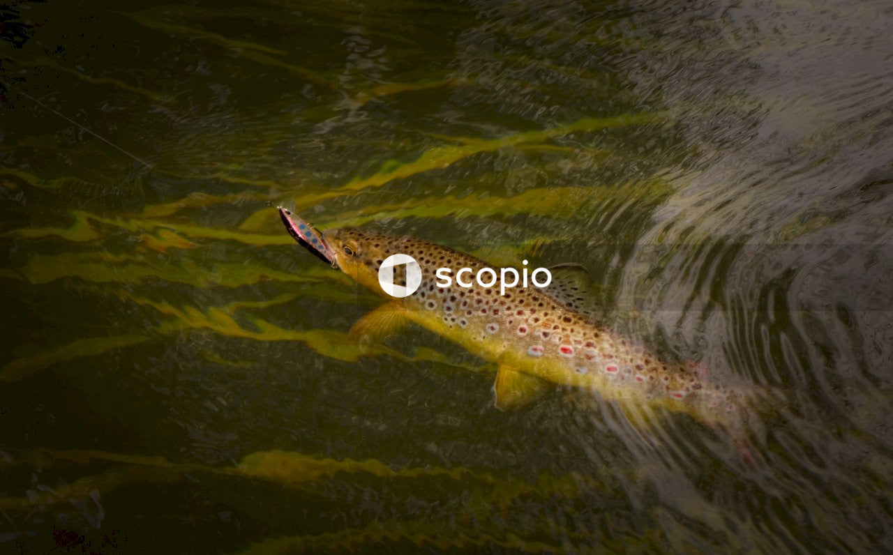 Brown and black fish on water