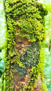 Brown tree trunk with green moss