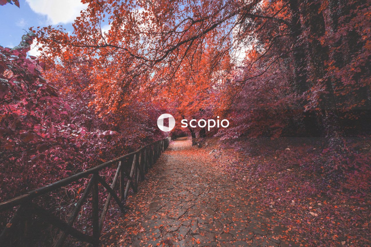Brown wooden bridge surrounded by red and brown trees