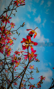 Red and yellow flower under blue sky