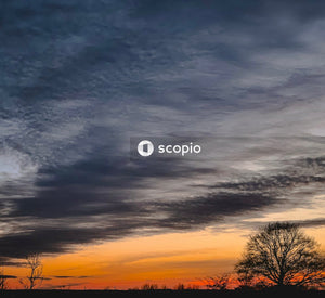 Leafless trees under cloudy sky during sunset