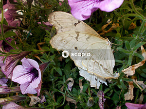 A butterfly sits on plant