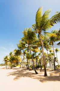 Green coconut palm trees on brown sand under blue sky