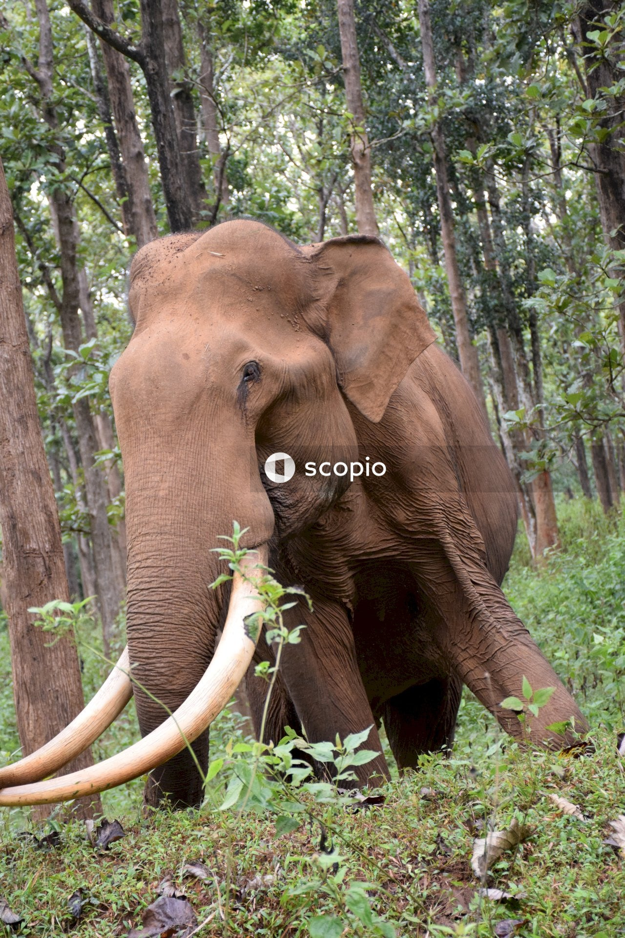 Brown elephant eating green plant
