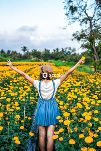 Woman in white and blue dress standing on yellow flower field