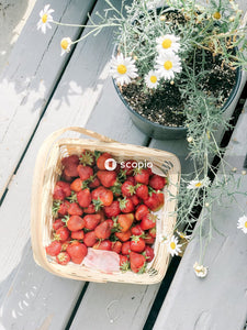 Berry fruit lot in a basket near flower plant in a pot on a brown wooden surface