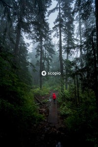 Person walking along a pathway in the forest