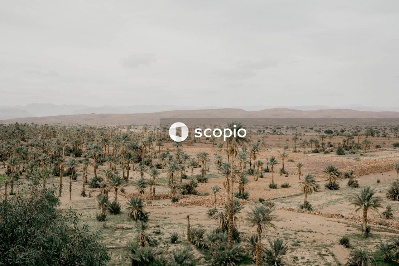 Aerial photography of green coconut trees viewing mountain