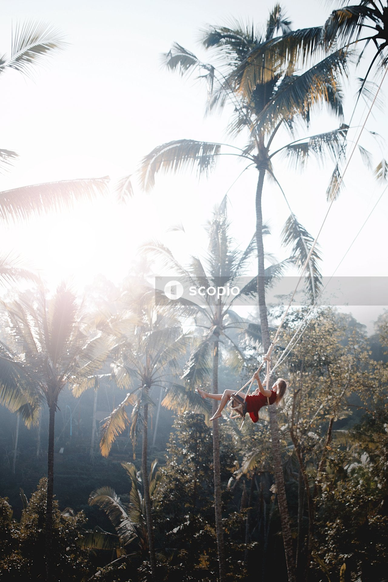 Man in red shirt and black shorts hanging on coconut tree