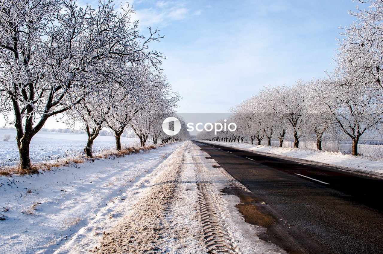 Snow covered road between bare trees under blue sky