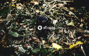 Black cat on dried leaves