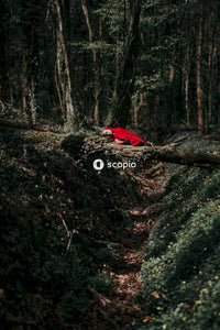 Red car on forest