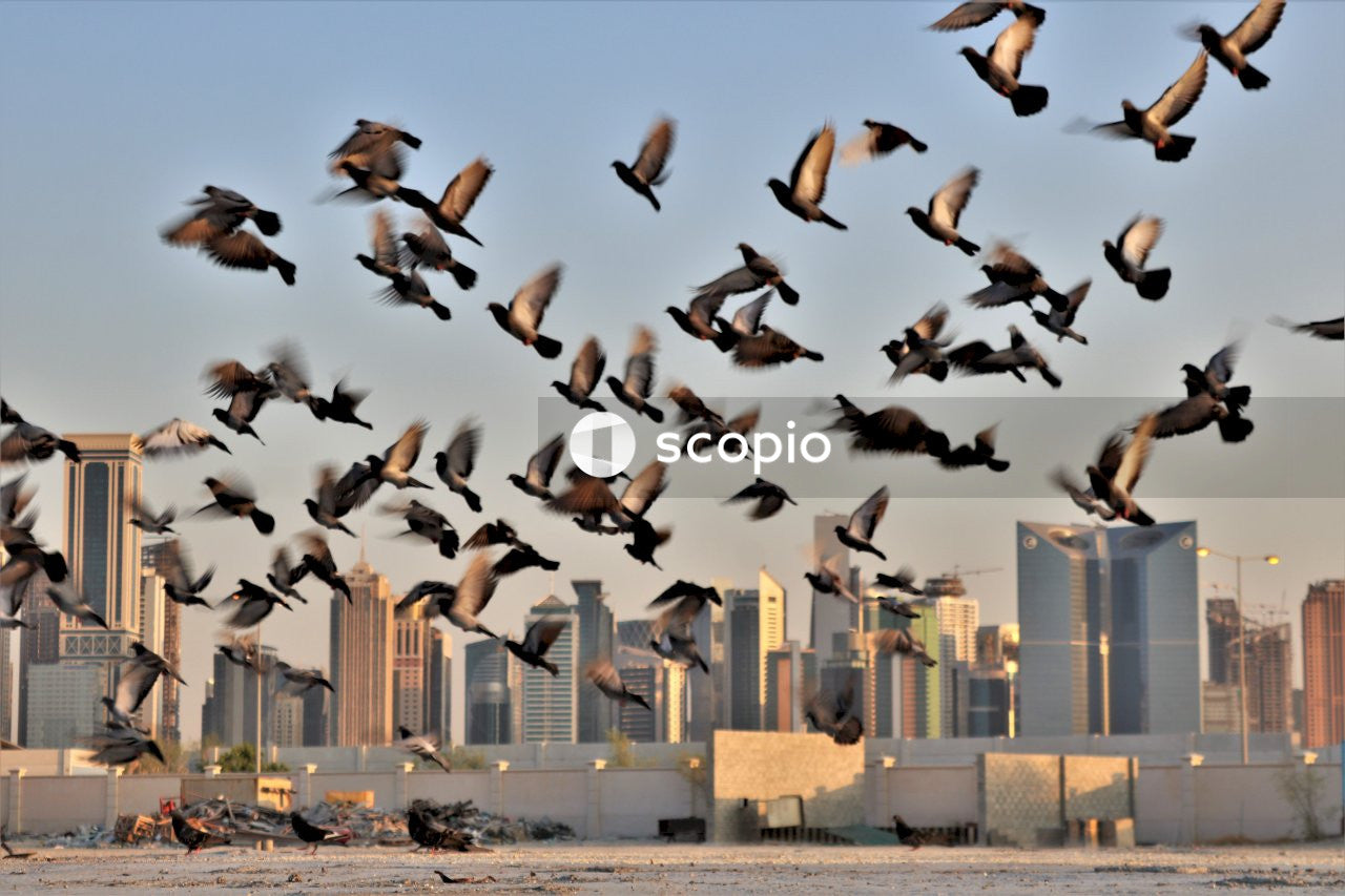 Flock of birds flying over the city