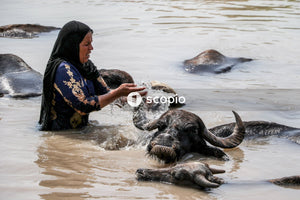 Man in blue and yellow shirt riding black elephant on water