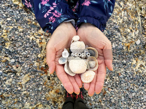 Person holding white and brown stones